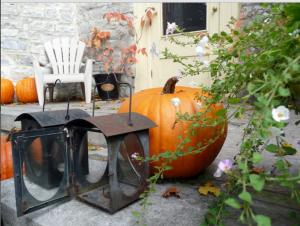 pic of pumpkins