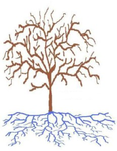 roots sketch