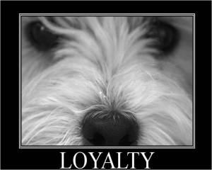 mojo loyalty